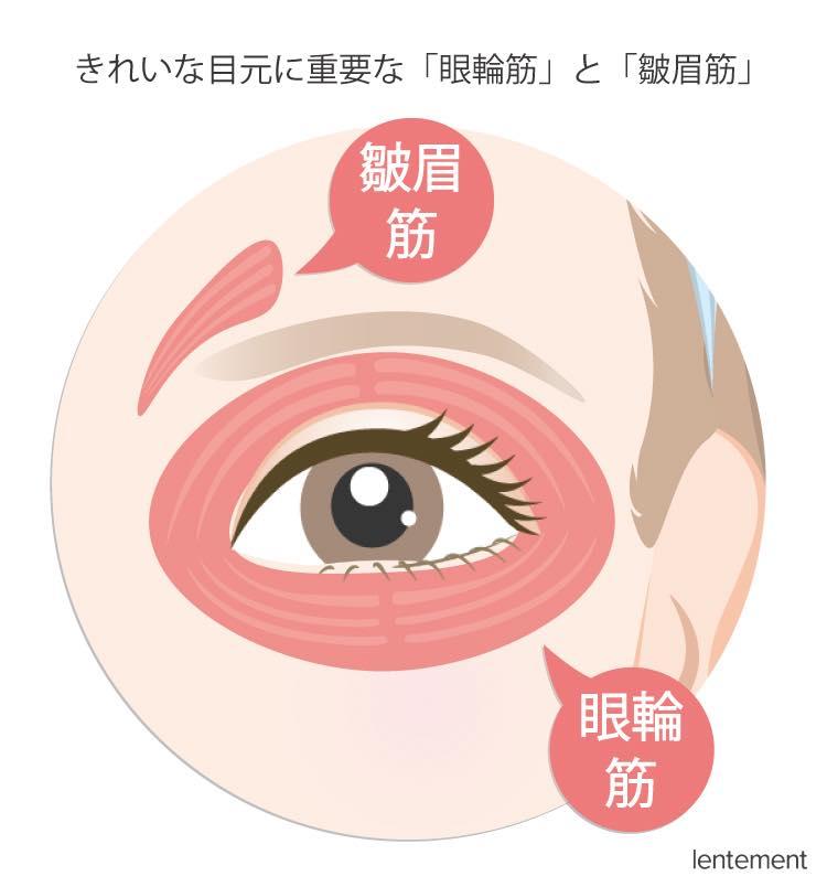 きれいな目元に重要な「眼輪筋」と「皺眉筋」