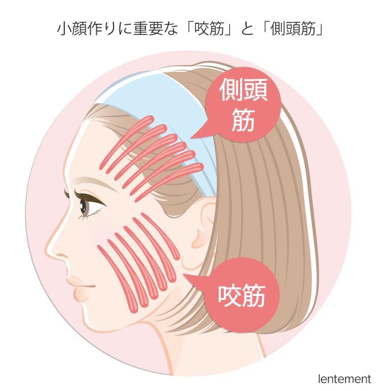 小顔作りに重要な「咬筋」と「側頭筋」