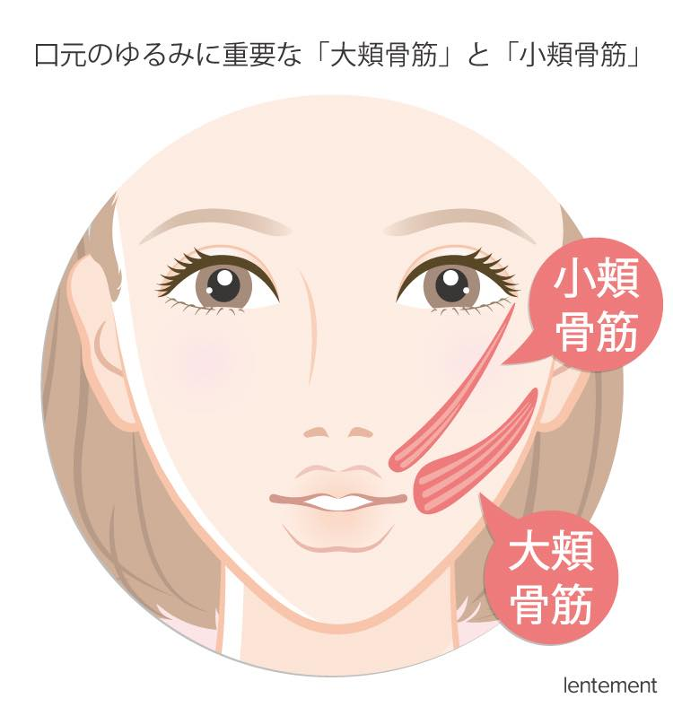 口元のゆるみに重要な「大頬骨筋」と「小頬骨筋」